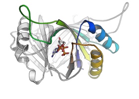 GlnK trimer with bound nucleotide